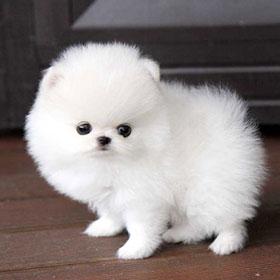 Tải Ứng Dụng Hình Nền Động Con Chó Con Hay Nhất Cho Android