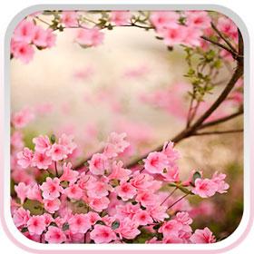Tải Ứng Dụng Hình Nền Động Hoa Mùa Xuân Cho Android Đẹp