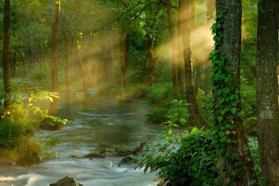 Những mẹo đơn giản để chụp ảnh đẹp trong rừng