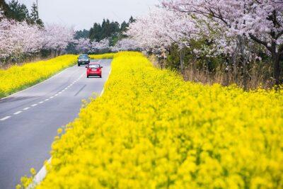 Du lịch Hàn Quốc vào mùa nào đẹp nhất?