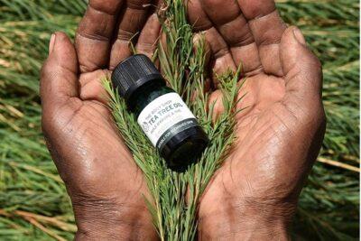 Tea Tree Oil trị mụn có tốt không? Hiệu quả trị mụn từ A đến Z