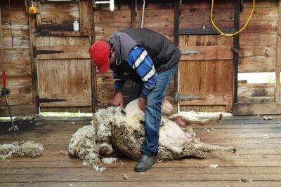 Đánh giá chăn lông cừu Morita có tốt không? 6 lý do nên mua cần lưu ý