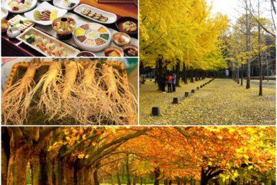 7 công ty chuyên tour Hàn Quốc mùa thu trọn gói bình chọn tốt nhất