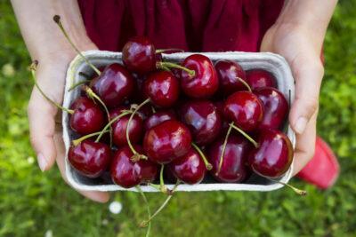 Cách phân biệt cherry nhập khẩu Úc, Mỹ, Chile, Tàu loại nào ngon bổ