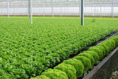 Thực phẩm sạch organic là gì, giá bao nhiêu, mua ở đâu?