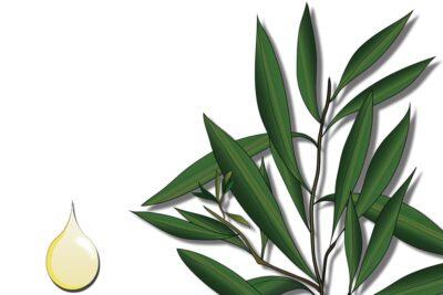 15 tác dụng tinh dầu tràm thần kỳ cho phụ nữ, nam giới và trẻ nhỏ