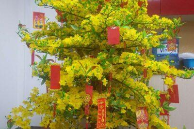 8 cách trang trí cây mai ngày Tết đẹp lung linh rước lộc xuân 2021