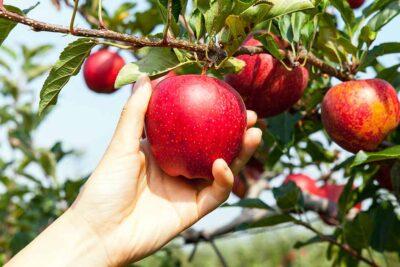 Người suy thận nên ăn trái cây gì? 10 hoa quả giúp tăng sức đề kháng