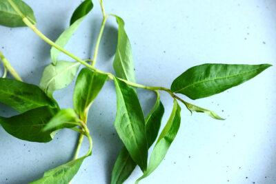 11 tác dụng của rau răm với sức khỏe đàn ông, phụ nữ làm đẹp, trị bệnh