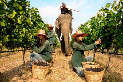 Kinh nghiệm du lịch Thái Lan lần đầu theo tour tiết kiệm nhất 2020