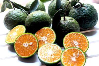 9 cách pha nước cam ngon đúng tỷ lệ cho bé, để buôn bán, người giảm cân