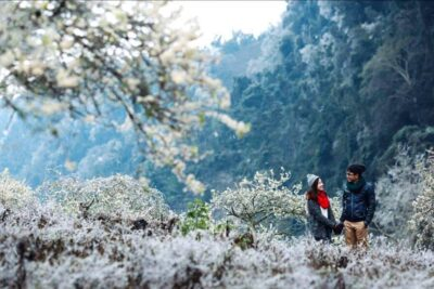 Đi Mộc Châu mùa nào đẹp nhất, thuê chỗ nghỉ ở đâu view chất giá rẻ