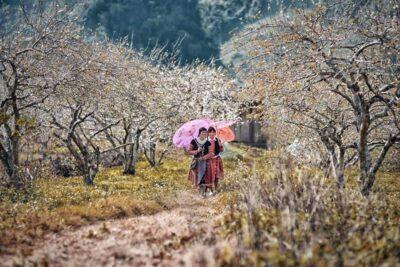 15 cảnh đẹp Mộc Châu 4 mùa view hoang sơ checkin chụp ảnh cực chất