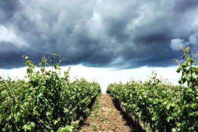 7 cách làm rượu nho tại nhà ngon thơm nhất kèm hướng dẫn bảo quản