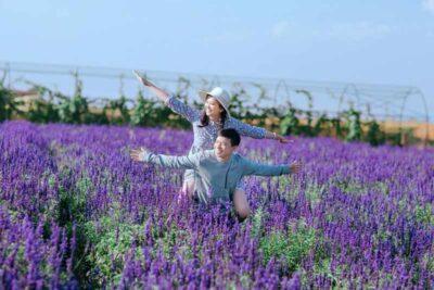 24 cánh đồng hoa Đà Lạt đẹp ngây ngất 4 mùa gần trung tâm thành phố