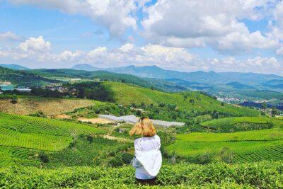Kinh nghiệm đi đồi chè Cầu Đất Đà Lạt: Đường đi, Địa chỉ, Mùa nào đẹp