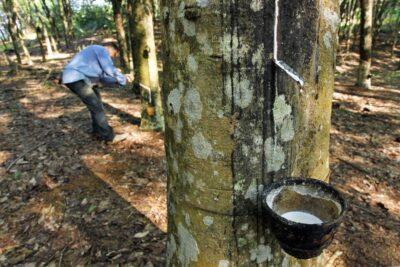 Quy trình sản xuất nệm cao su thiên nhiên đạt tiêu chuẩn như thế nào