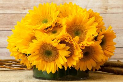 Ý nghĩa hoa hướng dương trong ngày 20/11, mua ở đâu giá ưu đãi