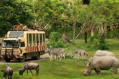 Kinh nghiệm đi Safari World Bangkok có gì: Giá vé, Điểm tham quan
